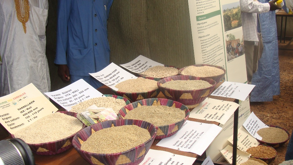 Présentation des céréales: Bourse de Ségou, AMASSA, mars 2012