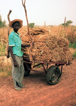 Charrette de mil au Burkina