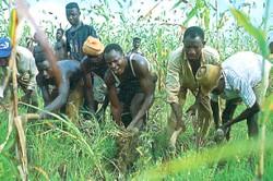Travaux des champs au Sahel en zone agricole excédentaire