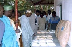 Examen des échantillons de céréales lors d'une bourse céréalière